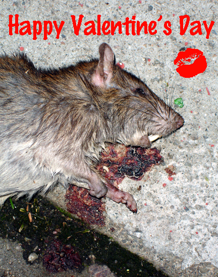 Valentines_rat